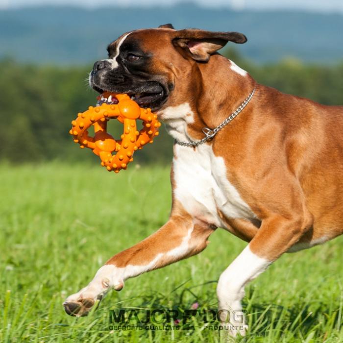 Risultati immagini per Ball di MajorDog  gioco cane